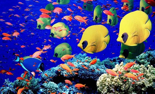 Barrera-de-coral